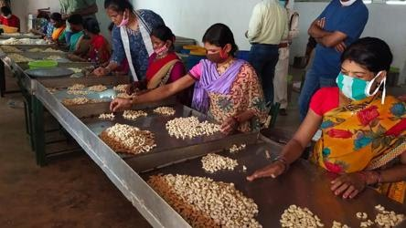 The forest department claimed nearly 6000 forest dwelling families have collected cashew this year and each family has earned the average income of Rs 10000 in Bastar